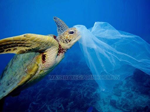 Sinh vật biển nuốt phải rác thải nhựa