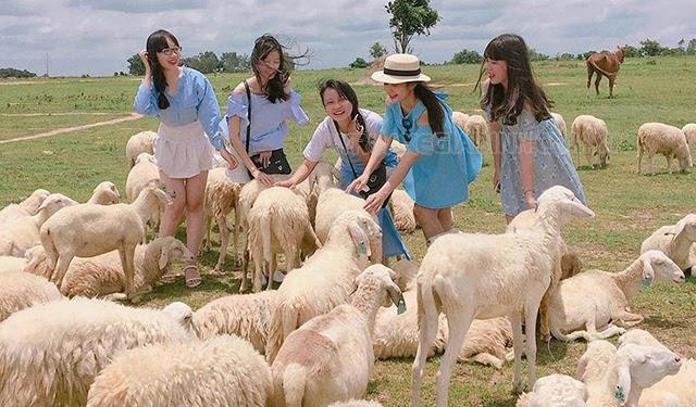 Cánh đồng cừu